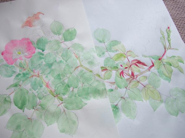 薔薇のスケッチ