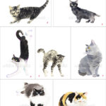 猫の絵はがき新作。